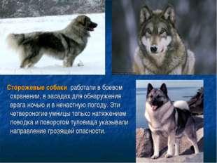 Сторожевые собаки работали в боевом охранении, в засадах для обнаружения вр