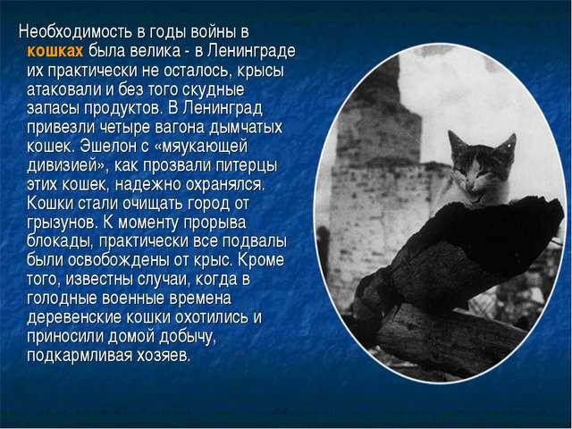Необходимость в годы войны в кошках была велика - в Ленинграде их практическ...