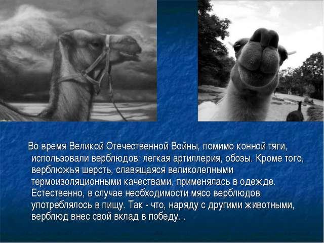 Во время Великой Отечественной Войны, помимо конной тяги, использовали вербл...