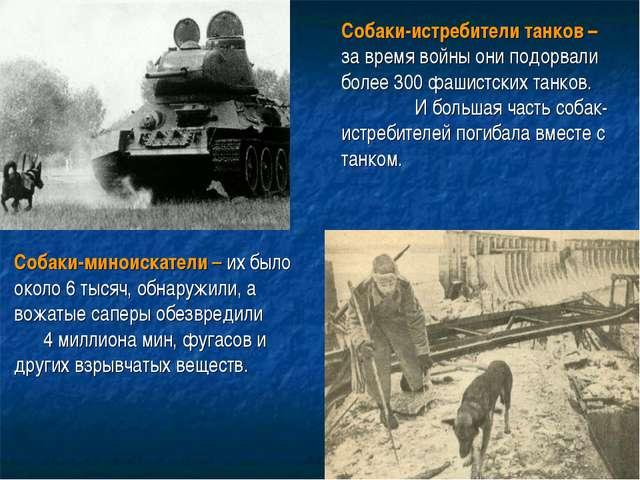 Собаки-истребители танков– за время войны они подорвали более 300 фашистских...