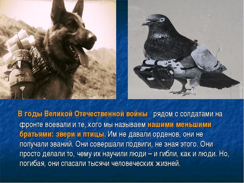 В годы Великой Отечественной войны рядом с солдатами на фронте воевали и те...