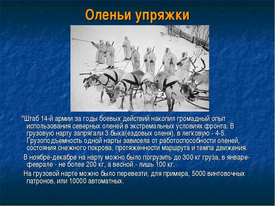 """Оленьи упряжки """"Штаб 14-й армии за годы боевых действий накопил громадный опы..."""
