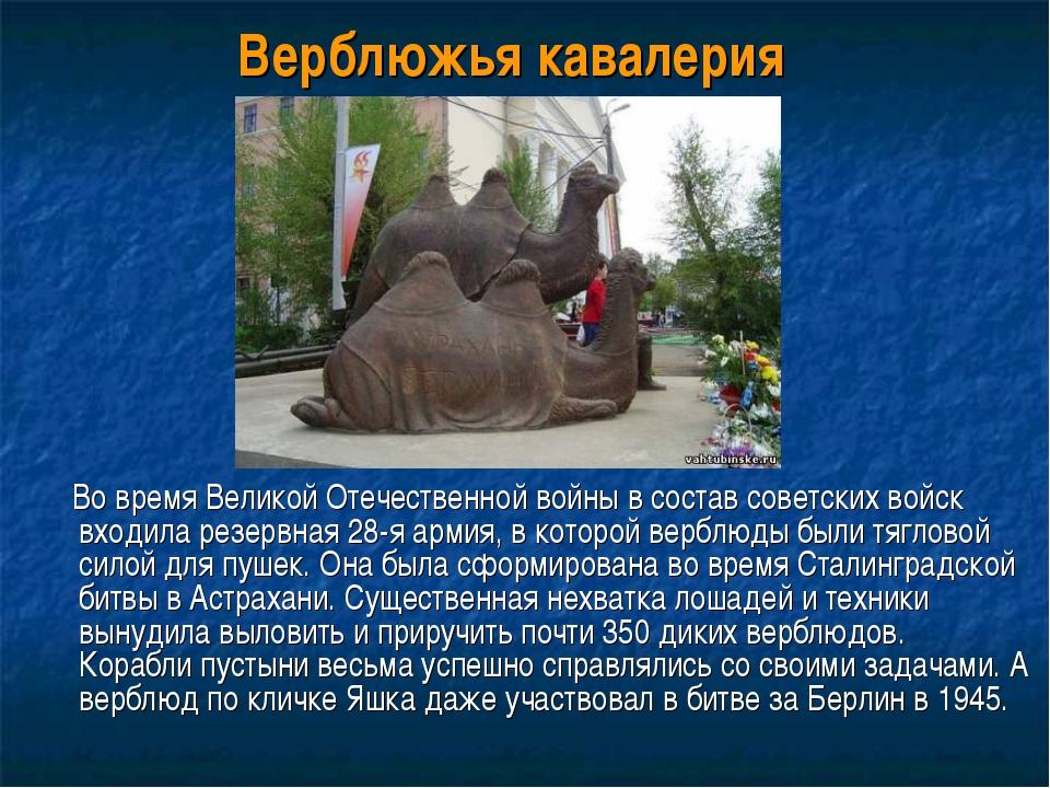 Верблюжья кавалерия Во время Великой Отечественной войны в состав советских в...