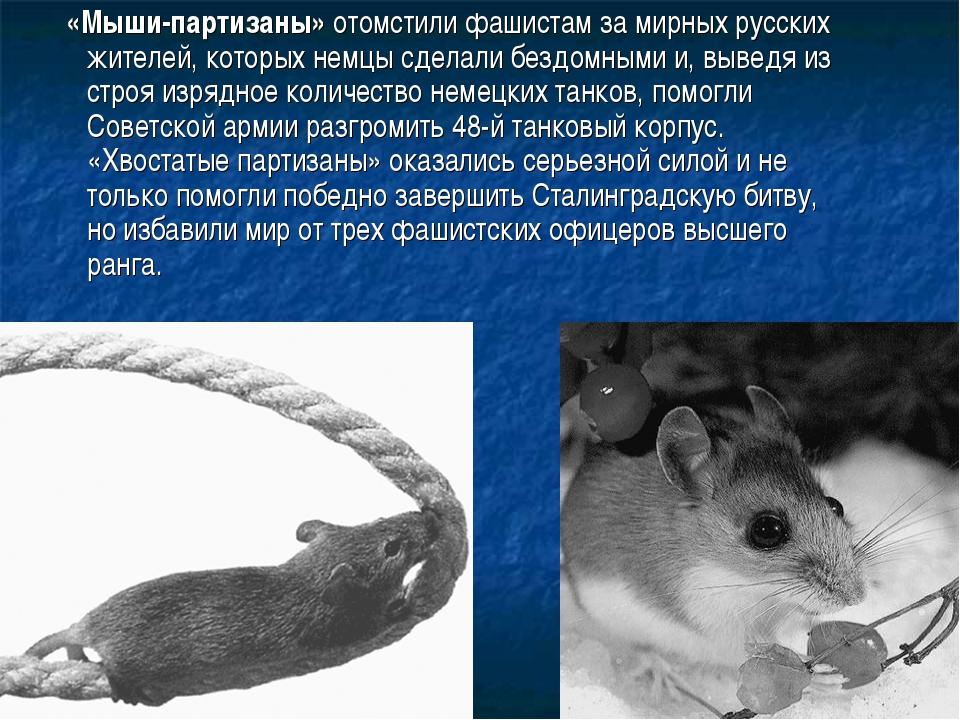 «Мыши-партизаны» отомстили фашистам за мирных русских жителей, которых немцы...