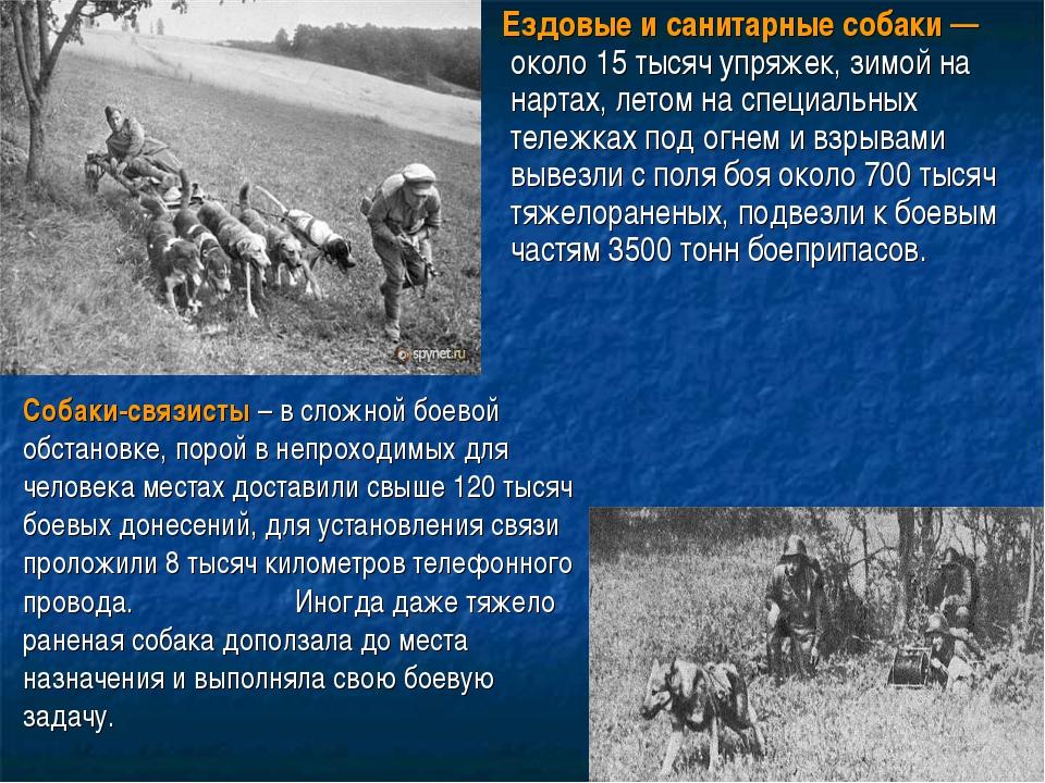 Ездовые и санитарные собаки— около 15 тысяч упряжек, зимой на нартах, летом...