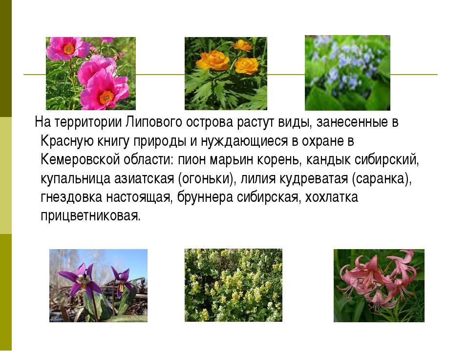 На территории Липового острова растут виды, занесенные в Красную книгу приро...