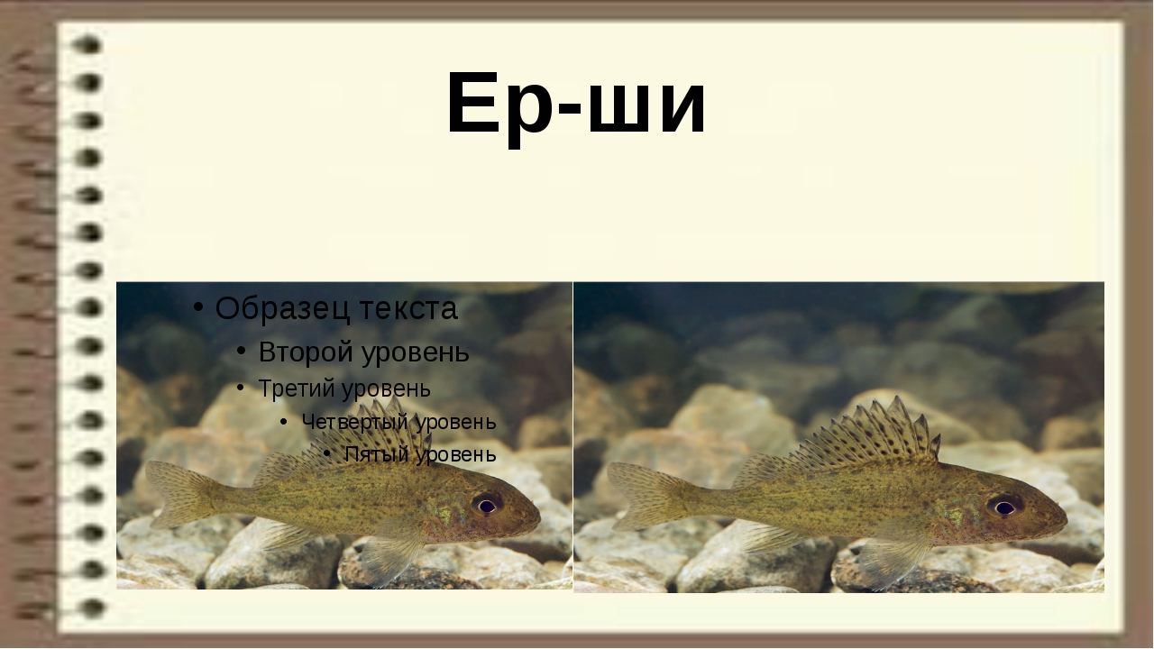 Ер-ши