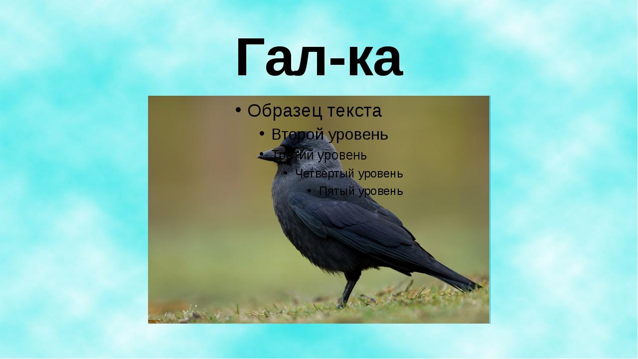 Гал-ка