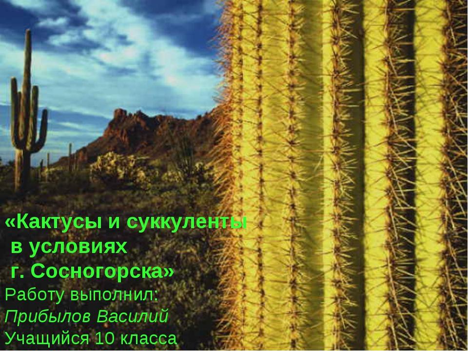 «Кактусы и суккуленты в условиях г. Сосногорска» Работу выполнил: Прибылов Ва...