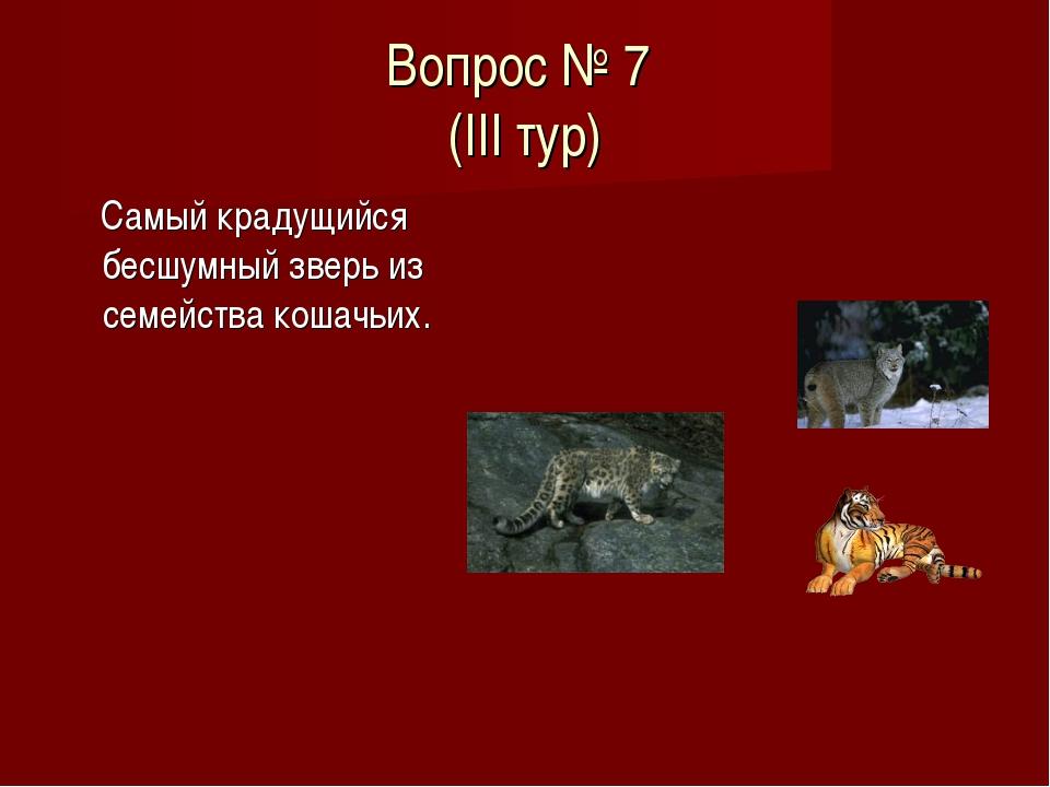 Вопрос № 7 (III тур) Самый крадущийся бесшумный зверь из семейства кошачьих.