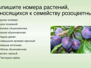 Выпишите номера растений, относящихся к семейству розоцветных 1.Ярутка полева