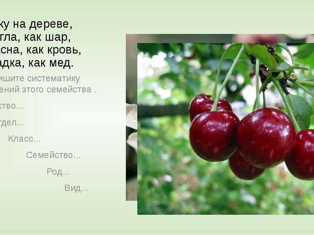 Сижу на дереве, Кругла, как шар, Красна, как кровь, Сладка, как мед. Выпишите...