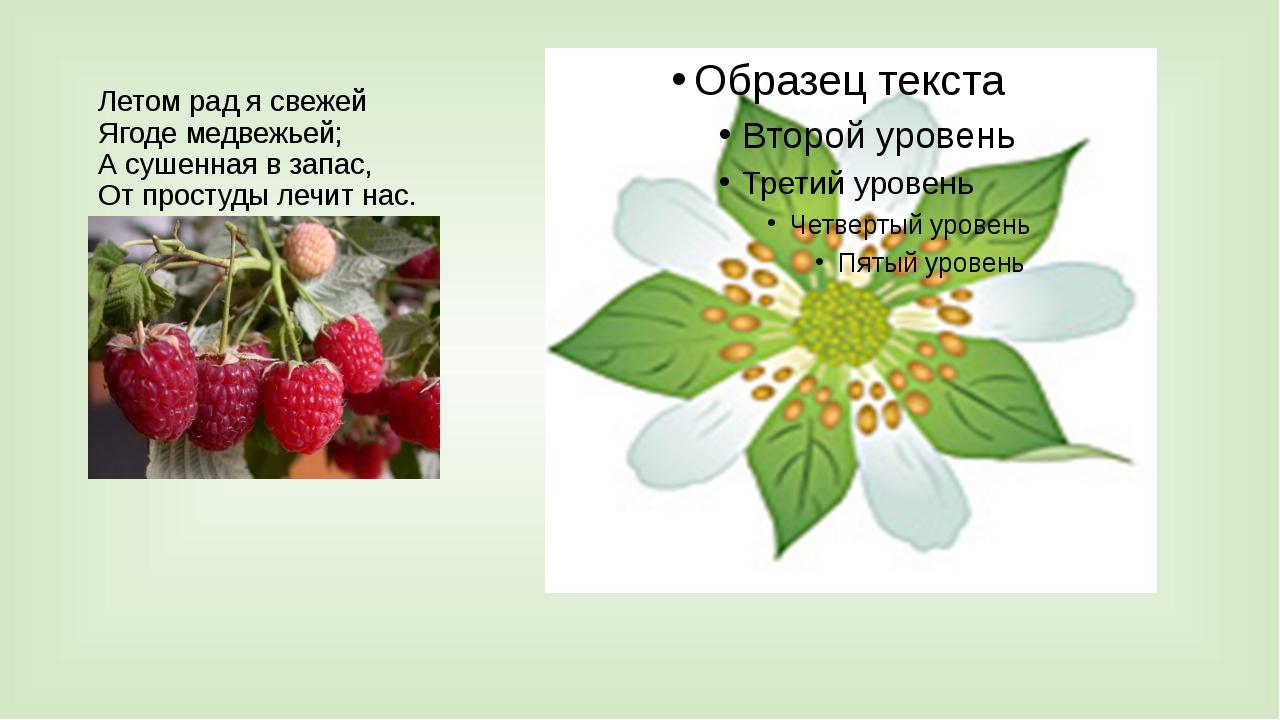 Летом рад я свежей Ягоде медвежьей; А сушенная в запас, От простуды лечит нас...