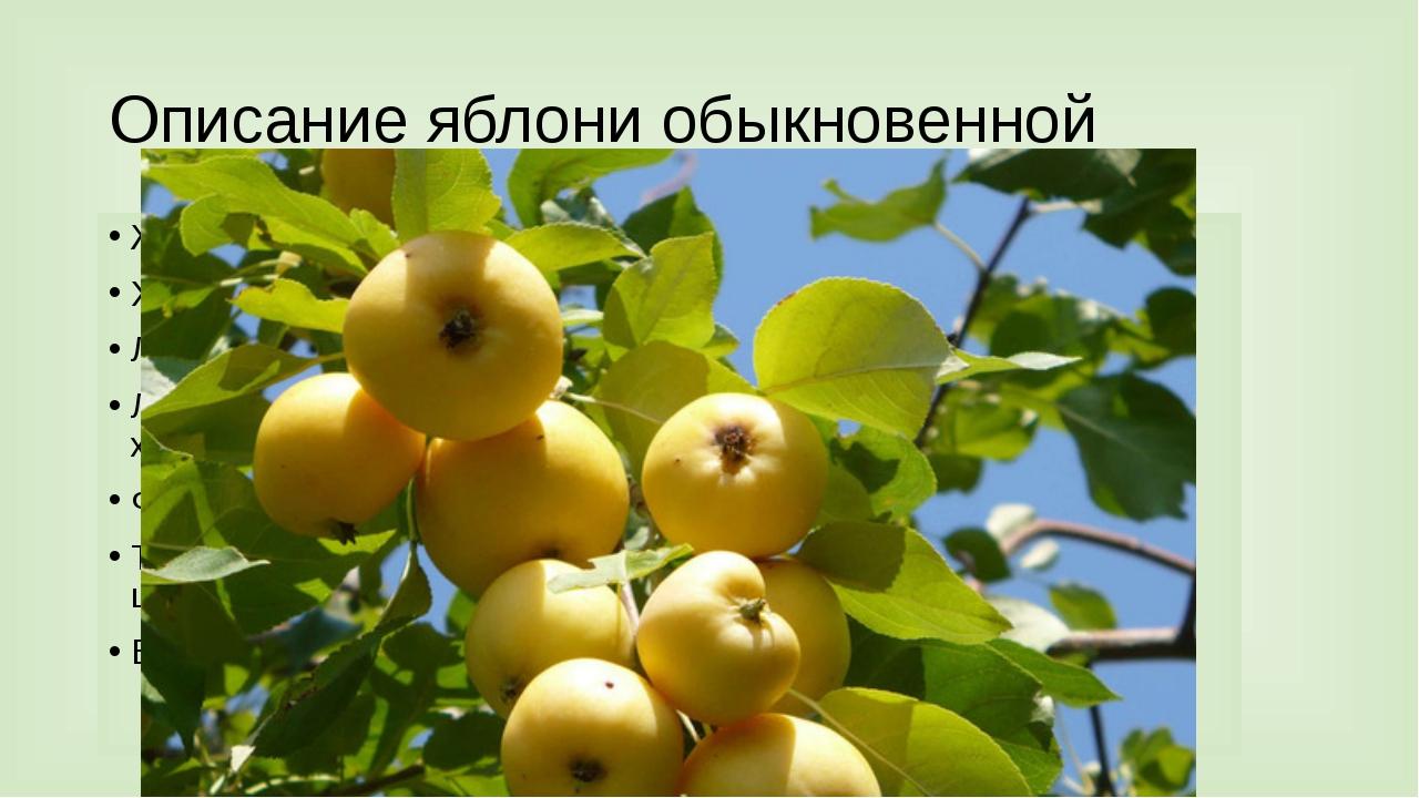 Описание яблони обыкновенной Жизненная форма (трава, кустарник, дерево) Харак...
