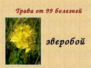 Трава от 99 болезней зверобой