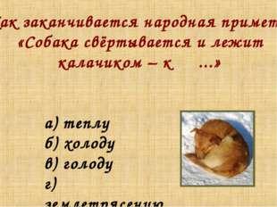 Как заканчивается народная примета: «Собака свёртывается и лежит калачиком –