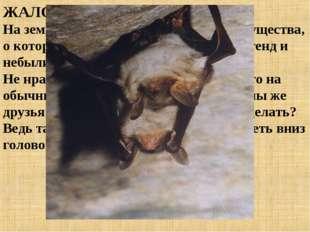 ЖАЛОБА № 2 На земном шаре нет, пожалуй, такого существа, о котором рассказыва