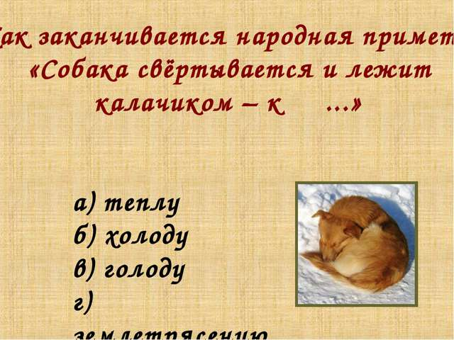 Как заканчивается народная примета: «Собака свёртывается и лежит калачиком –...