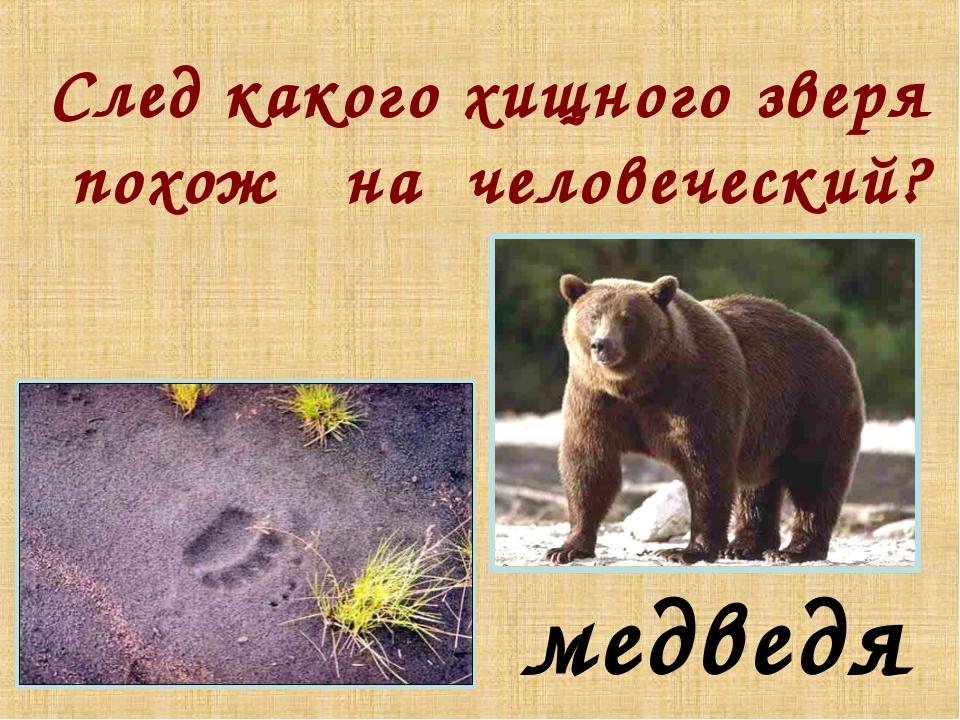 След какого хищного зверя похож на человеческий? медведя