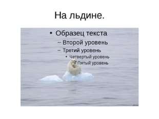 На льдине.