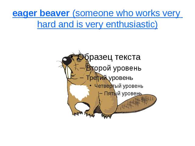 eager beaver (someone who works very hard and is very enthusiastic)