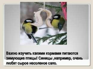 Важно изучить какими кормами питаются зимующие птицы! Синицы ,например, очень