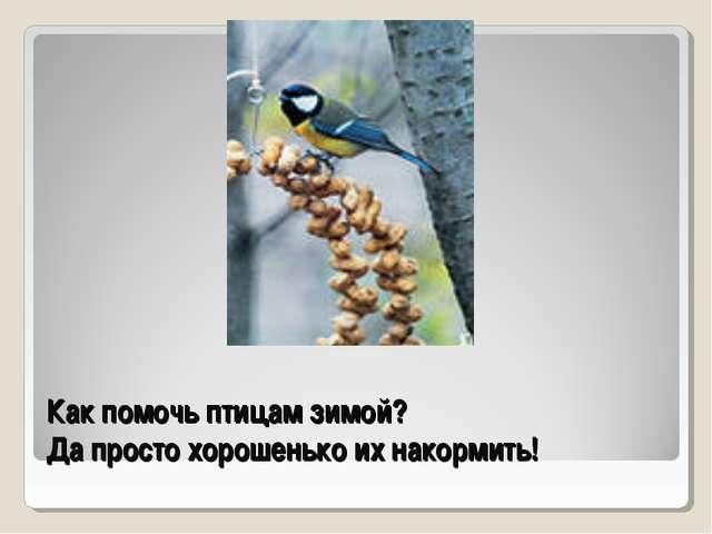 Как помочь птицам зимой? Да просто хорошенько их накормить!