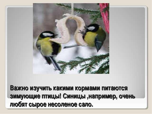 Важно изучить какими кормами питаются зимующие птицы! Синицы ,например, очень...