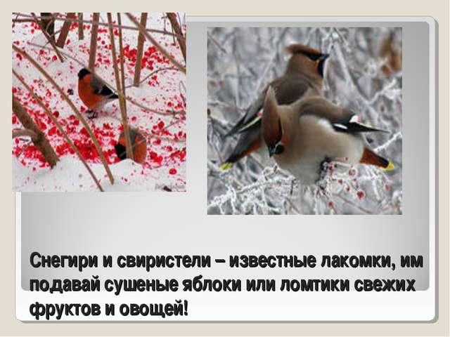 Снегири и свиристели – известные лакомки, им подавай сушеные яблоки или ломти...
