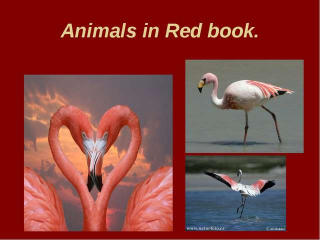 Animals in Red book.