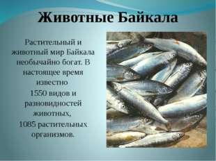 Животные Байкала Растительный и животный мир Байкала необычайно богат. В наст