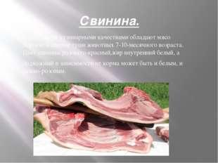 Свинина. Наилучшими кулинарными качествами обладают мясо поросят и свиные туш