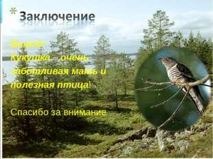 Вывод: Кукушка – очень заботливая мать и полезная птица! Спасибо за внимание