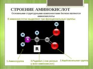 1.Аминогруппа 3.Радикал ( они разные у всех аминокислот) 2.Карбоксильная груп