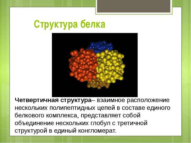 Структура белка Четвертичная структура– взаимное расположение нескольких поли...