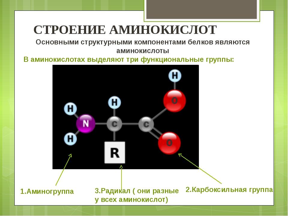1.Аминогруппа 3.Радикал ( они разные у всех аминокислот) 2.Карбоксильная груп...