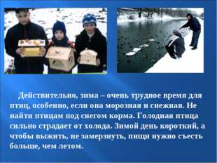 Действительно, зима – очень трудное время для птиц, особенно, если она мороз