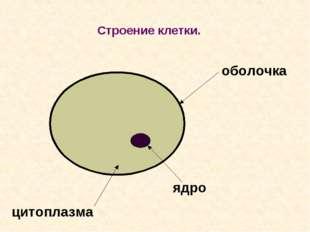 Строение клетки. оболочка цитоплазма ядро