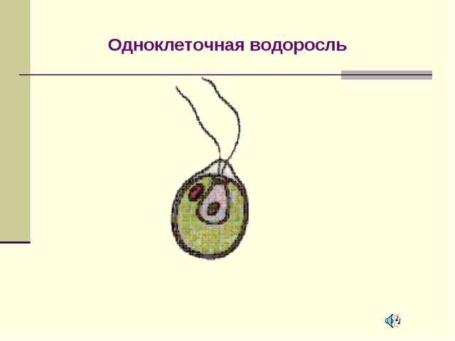 Одноклеточная водоросль