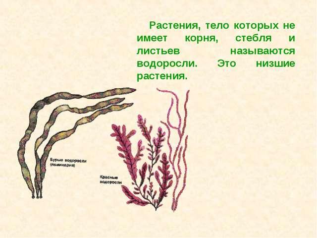 Растения, тело которых не имеет корня, стебля и листьев называются водоросли....