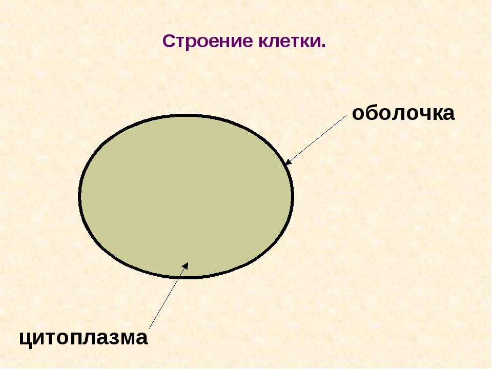Строение клетки. оболочка цитоплазма