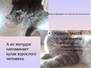 Факты утверждают, что коты спят 20 часов в сутки. А их желудок напоминает кул