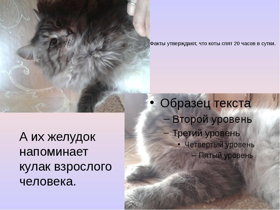 Факты утверждают, что коты спят 20 часов в сутки. А их желудок напоминает кул...