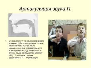 Артикуляция звука П: Образуется путём смыкания верхних и нижних губ с последу