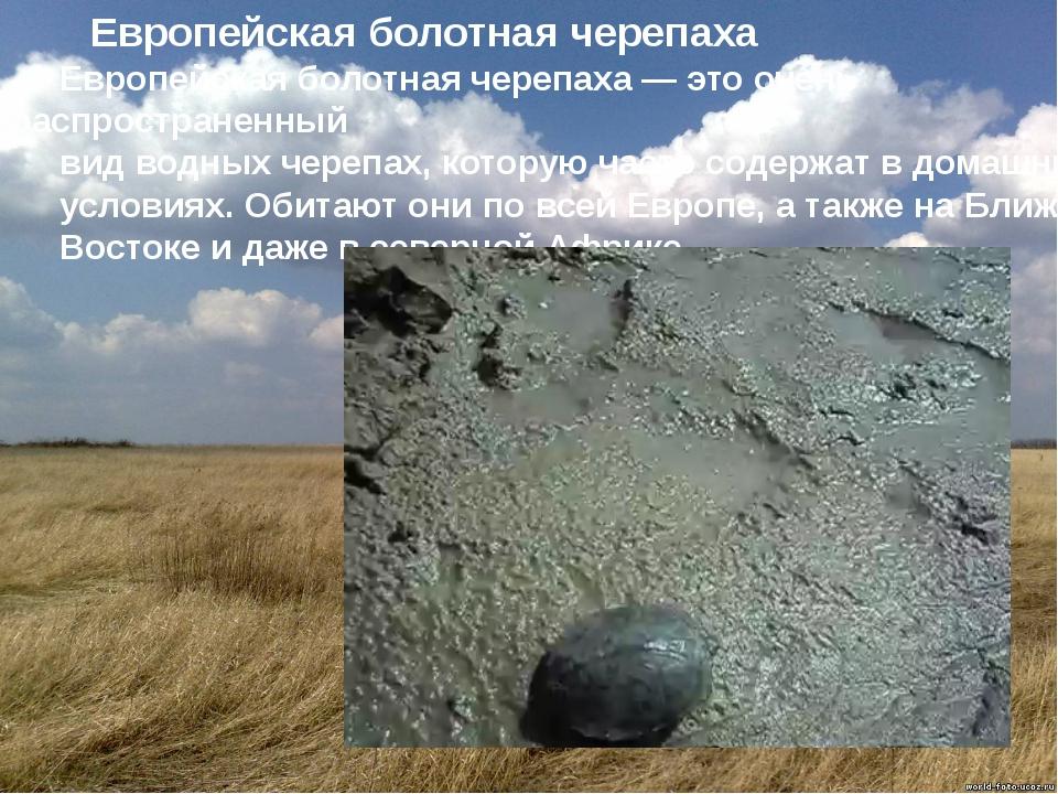 Европейская болотная черепаха Европейская болотная черепаха — это очень расп...