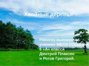 Хвойные деревья Работоу выполнили ученики МБОУ ГСОШ №1 6 «А» класса Дмитрий