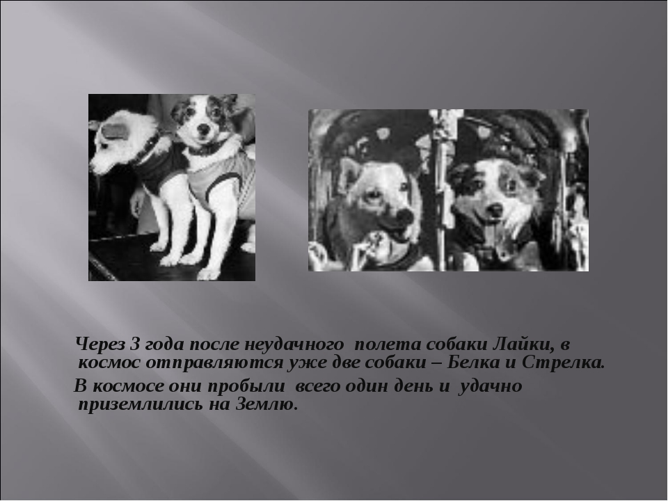 Через 3 года после неудачного полета собаки Лайки, в космос отправляются уже...