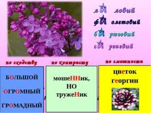 л ловый ф олетовый б рюзовый с реневый Лиловый, фиолетовый, бирюзовый, сирене