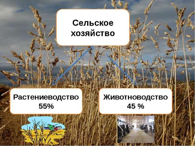 Животноводство 45 % Растениеводство 55% Сельское хозяйство