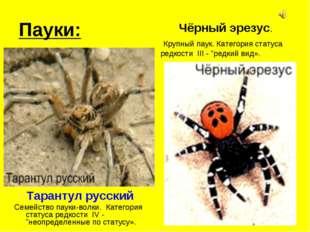 Пауки: Тарантул русский Семейство пауки-волки. Категория статуса редкости IV